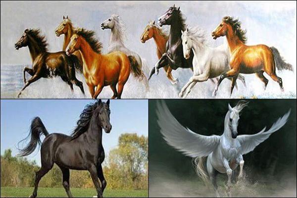 Nằm mơ thấy ngựa