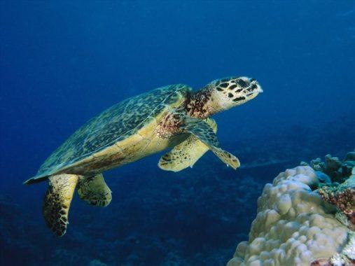 Mơ thấy rùa có ý nghĩa gì và nên đánh con số đề nào là ăn chắc