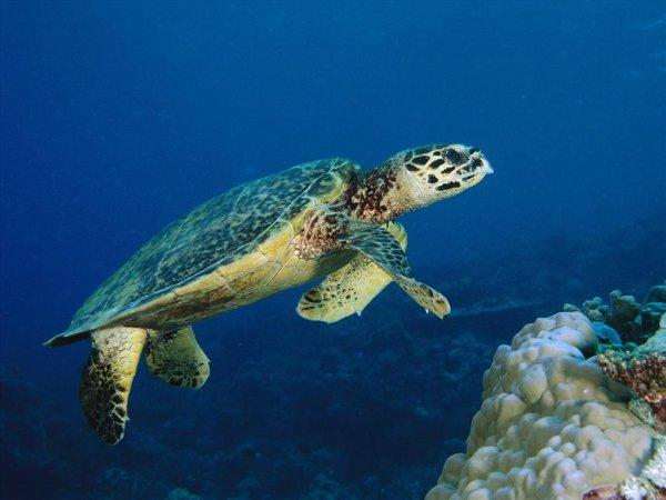 mơ-thấy-rùa