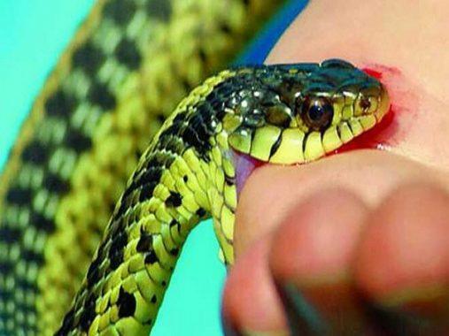 Mơ thấy rắn cắn ý nghĩa gì và đánh con loto nào là may mắn