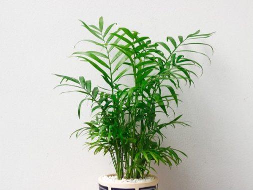 4 loài cây phong thủy hợp mệnh Mộc, cầu tài lộc may mắn