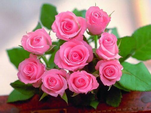 Giải mã giấc mơ thấy hoa hồng điềm gì, đánh con gì