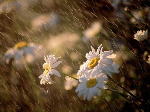 Giải mã ý nghĩa giấc mơ thấy mưa là điềm gì?