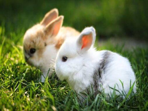 Nằm mơ thấy thỏ là điềm hên hay xui ? Đánh lô đề con gì ?