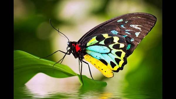 Nằm mơ thấy bướm bay vào nhà là điềm gì? nên đánh số mấy