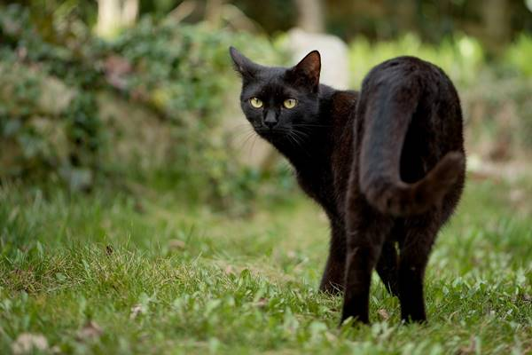 Mèo vào nhà đánh con gì