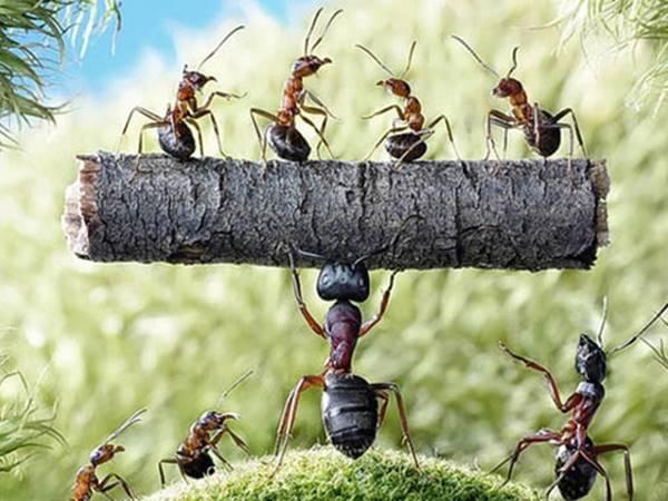 Mơ thấy đàn kiến là điềm hên hay xui? Kiến là số mấy?