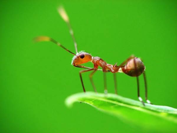 Giải mã nằm mơ thấy con kiến là điềm báo trước gì?