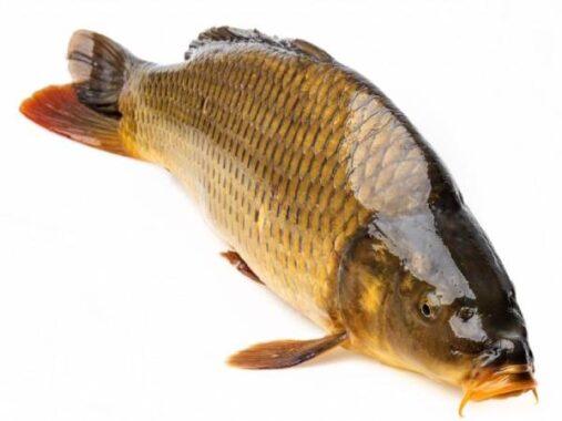 Nằm mơ thấy cá là điềm hên hay xui ? Đánh số mấy trúng ?
