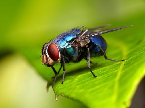 Nằm mơ thấy con ruồi đánh con gì ăn chắc, có điềm báo gì
